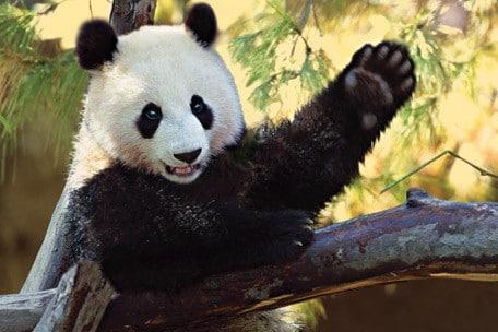 say hello chinese greetings