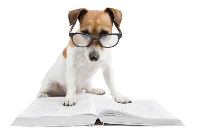 Adult reading comprehension