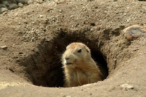 groundhog-day-esl-lesson