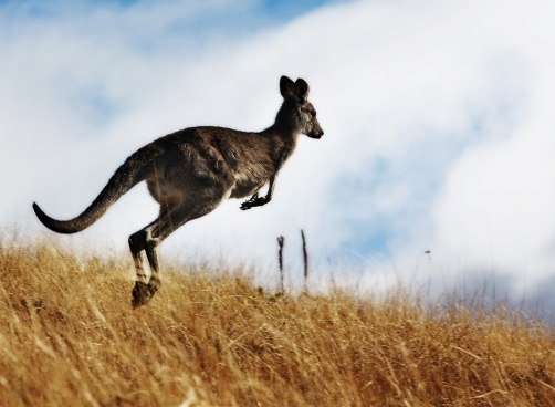 australischer Slang