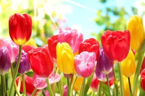 봄-영어-단어