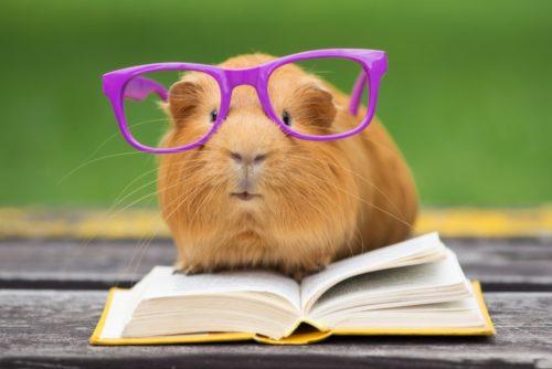 learn english reading 5