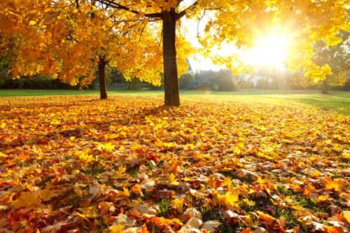 french-fall-autumn-vocabulary-word-list