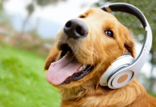 improve-german-listening