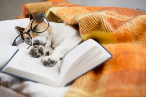 How to Boost German Learning in Your Sleep with ... - FluentU