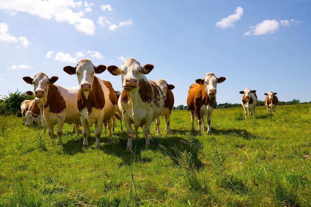 """animaux en allemand """"width ="""" 500 """"height ="""" 333 """"srcset ="""" https://www.fluentu.com/blog/german/wp-content/uploads/sites/5/2020/02/animals-in -german-1.jpg 1000w, https://www.fluentu.com/blog/german/wp-content/uploads/sites/5/2020/02/animals-in-german-1-300x200.jpg 300w, https : //www.fluentu.com/blog/german/wp-content/uploads/sites/5/2020/02/animals-in-german-1-768x511.jpg 768w """"tailles ="""" (largeur max: 500 px) 100vw, 500px """"/></p> <p>Avez-vous entendu parler d'Old MacDonald et de sa ferme?</p> <p>Si vous avez répondu oui à cette question (et je parie que vous l'avez fait!), Vous vous souvenez probablement d'un souvenir de vous-même en train de le chanter au préscolaire – ou du moins de penser à votre moi d'âge préscolaire!</p> <p>C'est parce que les animaux de ferme sont parmi les premiers noms d'animaux que les enfants apprennent à l'école.</p> <p>Non, je ne vous ferai pas les chanter, mais ce sont les premiers que nous allons apprendre en allemand! Ces animaux vivent <i>der Bauernhof </i>(la ferme) et sont pris en charge par <i>der Bauer </i>(l'agriculteur).</p> <p>Voyons quelques animaux de ferme courants:</p> <ul> <li style="""