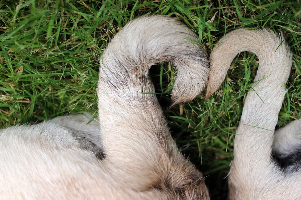 """animaux en allemand """"width ="""" 500 """"height ="""" 334 """"srcset ="""" https://www.fluentu.com/blog/german/wp-content/uploads/sites/5/2020/02/animals-in -german-6.jpg 1000w, https://www.fluentu.com/blog/german/wp-content/uploads/sites/5/2020/02/animals-in-german-6-300x200.jpg 300w, https : //www.fluentu.com/blog/german/wp-content/uploads/sites/5/2020/02/animals-in-german-6-768x512.jpg 768w """"tailles ="""" (largeur max: 500 px) 100vw, 500px """"/></p> <p>Les animaux, quelle que soit la langue utilisée pour en parler, ont des parties du corps différentes de la nôtre.</p> <p>Les parties d'animaux sont nommées comme suit en allemand:</p> <ul> <li style="""