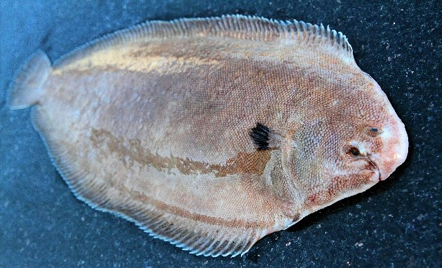 Go Fish 30 Spanish Fish Names Every Traveler Oughta Know