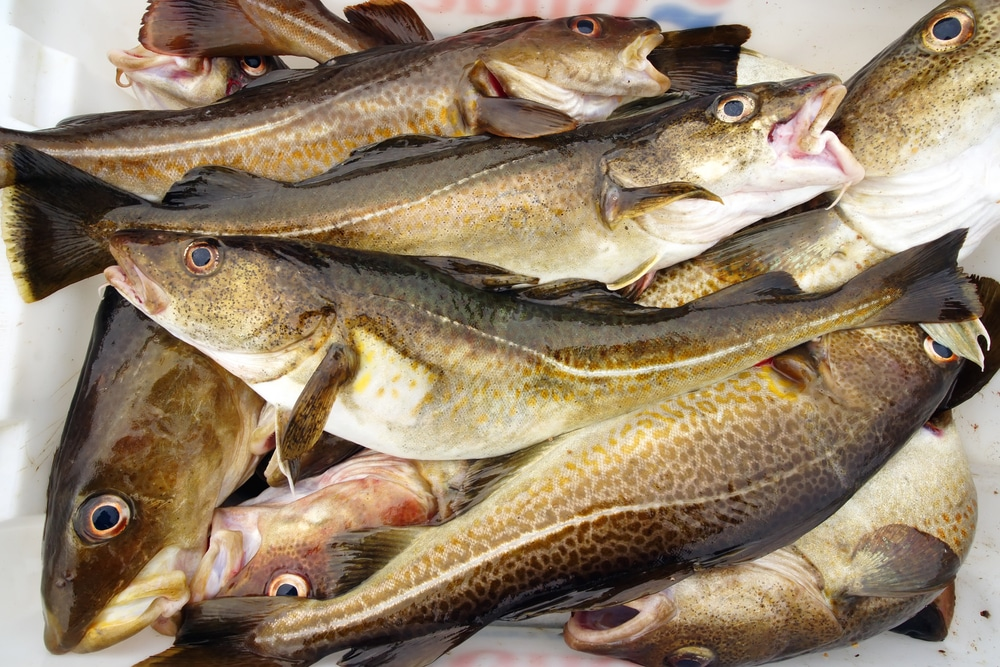 Go fish 30 spanish fish names every traveler oughta know for Cod fish stew