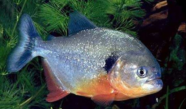Grouper Fish Recipes Fried