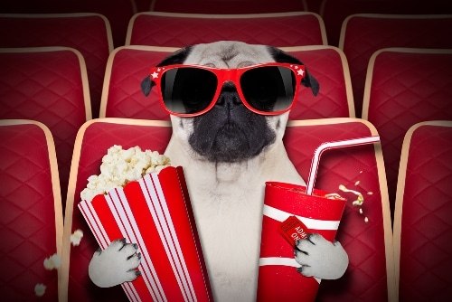 learning language through movies
