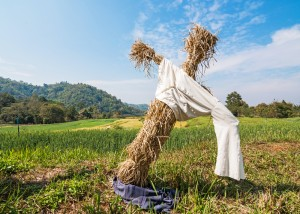Scarecrow in wheat field.
